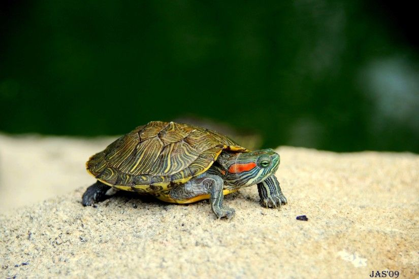 187 Turtle Wallpapers | Turtle Backgrounds Page 5