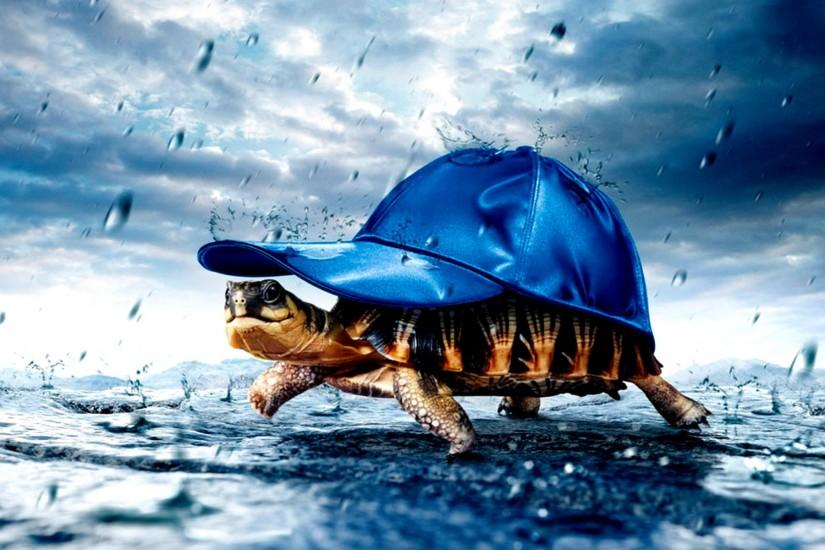Turtle HD Backgrounds Wallpapers, Backgrounds, Images, Art Photos