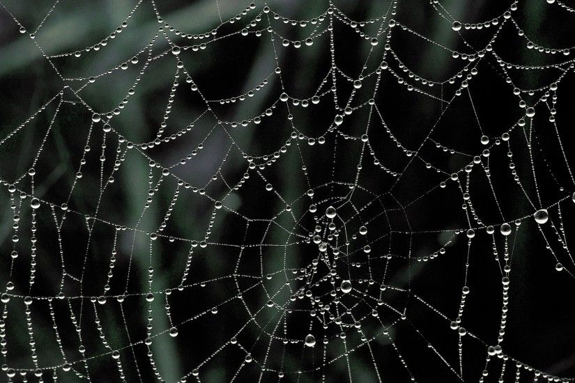 Amazing Spider Web wallpapers (60 Wallpapers)