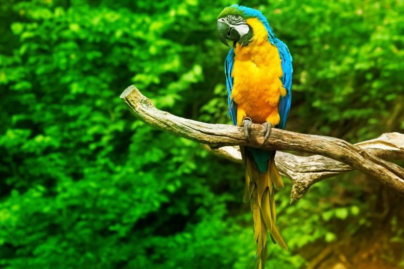 Beautiful Parrot Photos For Backgrounds
