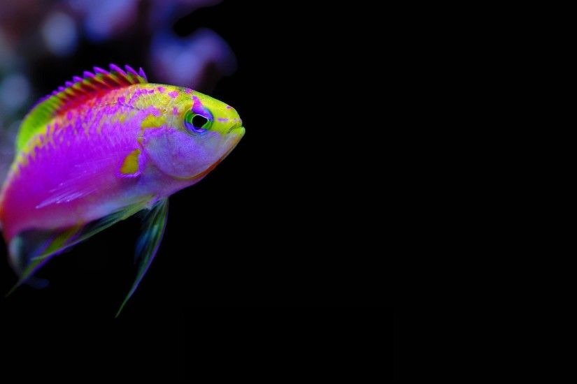Animals 1920x1080 Full HD Wallpapers - 1080p Wallpapers | ... Fish  Underwater Cartelthemes Wallpaper