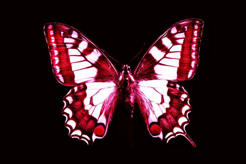 Red butterfly wallpaper - photo#2