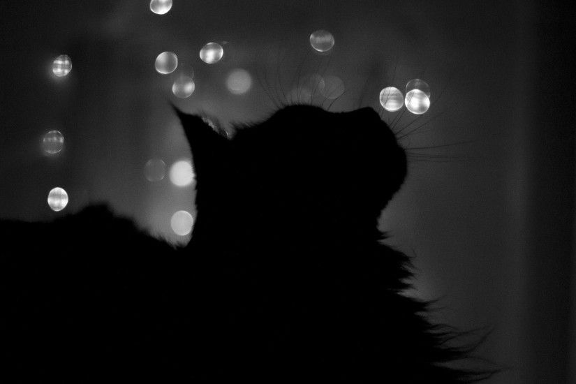 Black Cat Wallpaper 24144