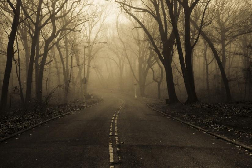 free download dark forest background 1920x1200 photos