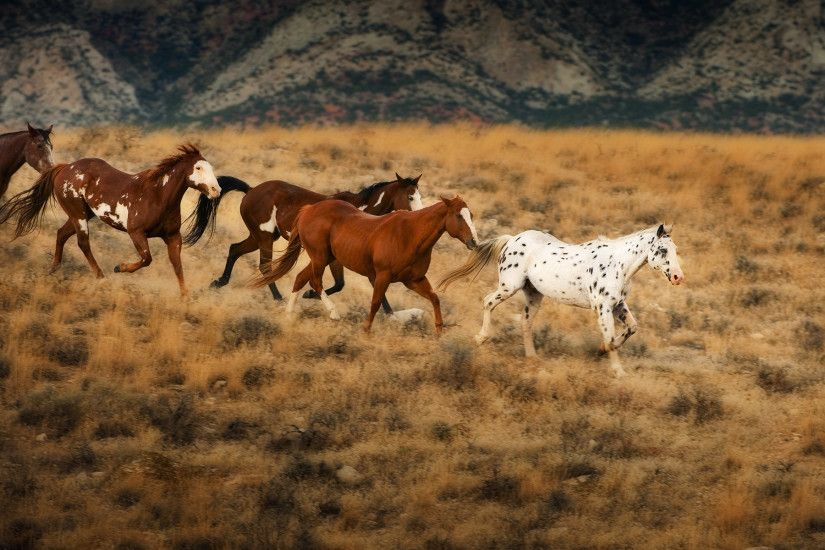 Wild horses in Wyoming. HD Wallpaper and background photos of Wild horses  in Wyoming for fans of Flicka & The Saddle Club images.