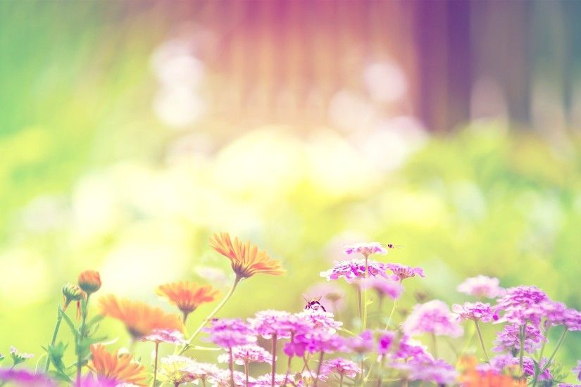 Summer Flowers Wallpaper Background