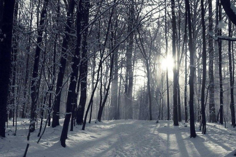 Title : winter forest wallpaper hd high quality snowy for androids |  wallvie. Dimension : 1920 x 1080. File Type : JPG/JPEG