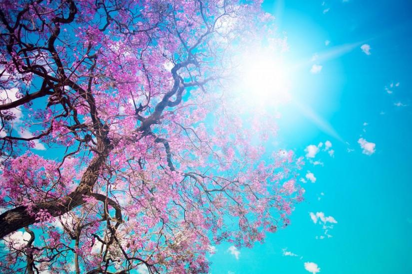Blooming Spring Wallpapers | HD Wallpapers