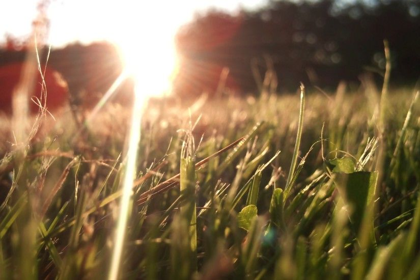 sunlight, grass, depth,nature, field, macro cool images, fullscreen, of, hd  wallpapers, lens, flare,windows backgrounds Wallpaper HD