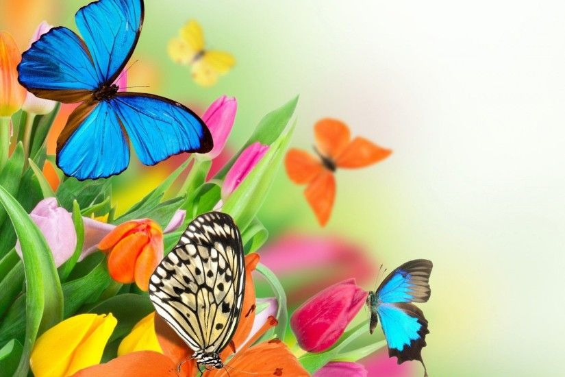 Butterfly Wallpaper High Quality Resolution