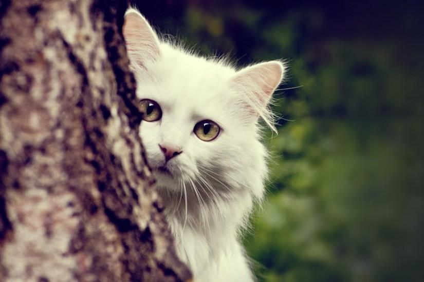 Beautiful White Cat Images background.
