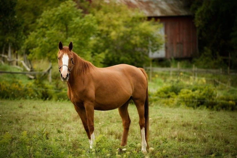 UPDATE- *Second* Horse Euthanized For Rabies