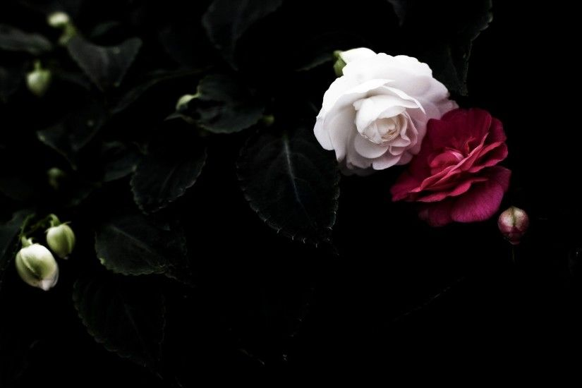 ... 1920x1200 Black And White Roses Wallpaper