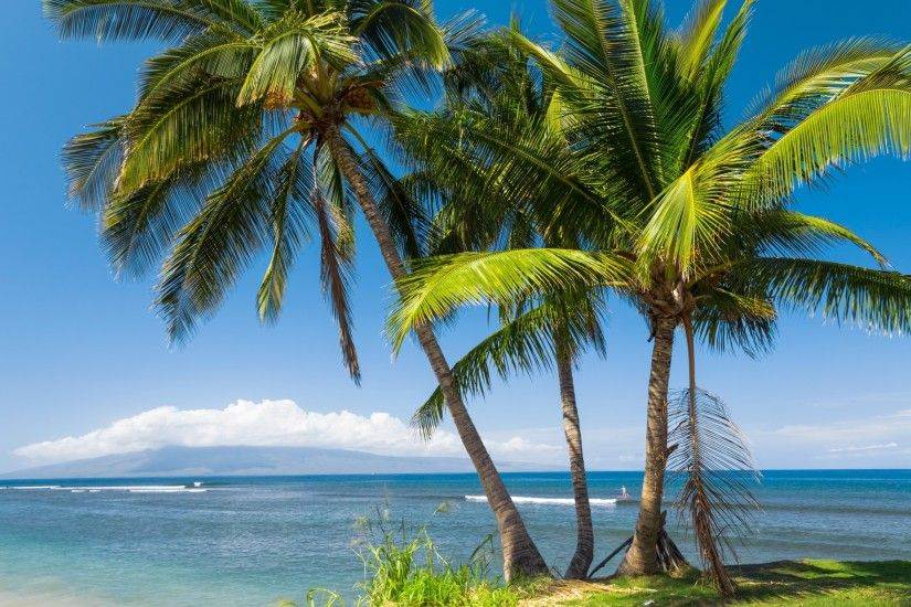 USA, Hawaii, sea, beach, palm tree, sun, tropics, palm