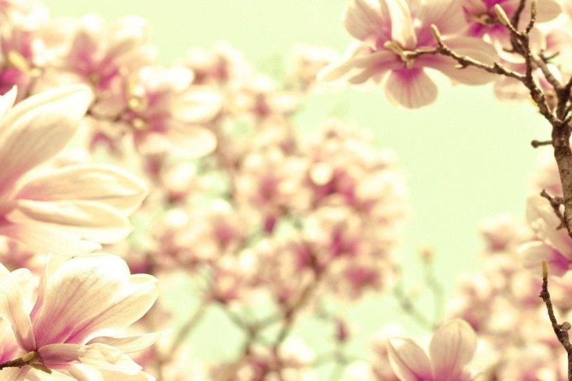 Magnolia Flower Wallpapers - HD Wallpapers Inn