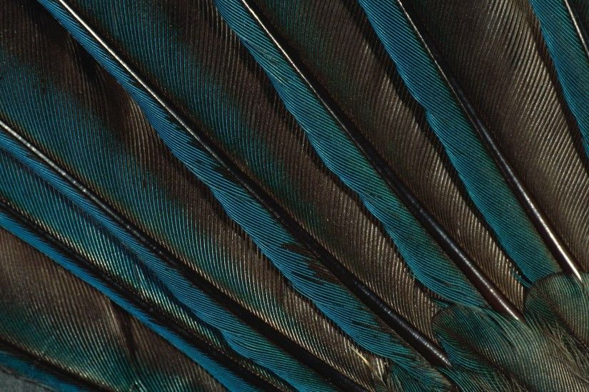 feathers feather peacock green wallpaper peacock feather