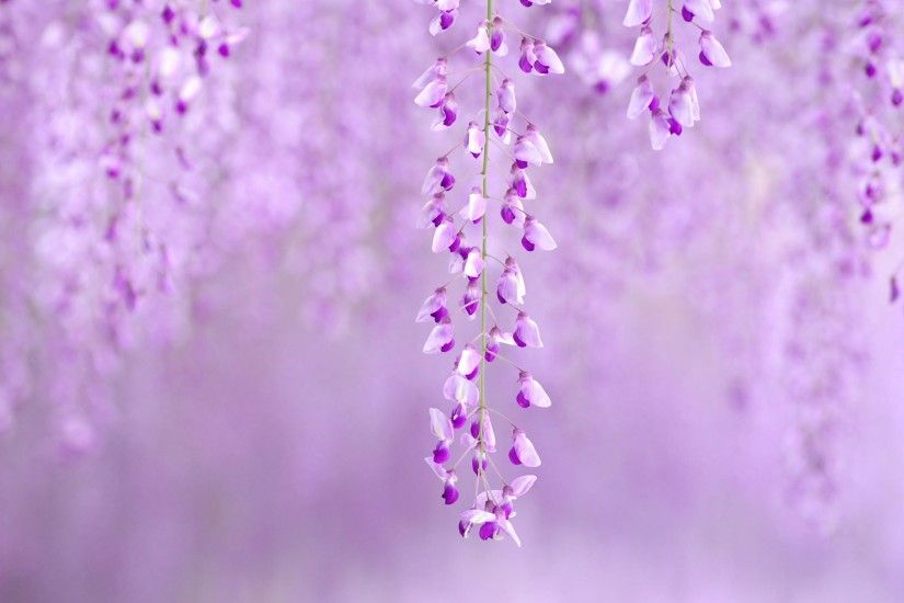 Gallery for - purple spring flowers wallpaper