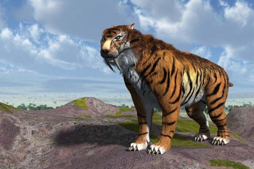sabre-toothed tiger wallpapers images photos pictures backgrounds