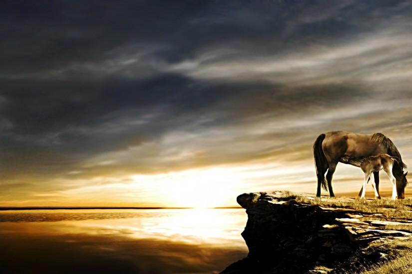 most popular horse backgrounds 1920x1200 download free