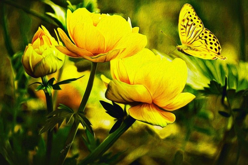 butterfly wallpaper desktop backgrounds