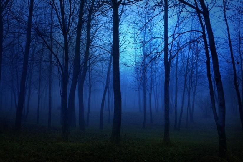 Forest nature tree landscape night fog mist dark spooky wallpaper |  1920x1080 | 799891 | WallpaperUP