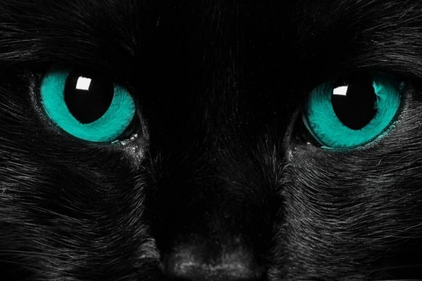 Preview wallpaper eyes, black cat, close-up 1920x1080