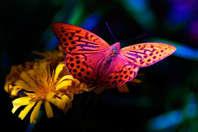 ... Wallpaper Color Butterfly Fullscreen ...