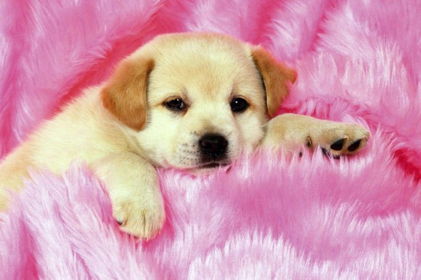 cute puppies wallpapers computer 28614poster.jpg
