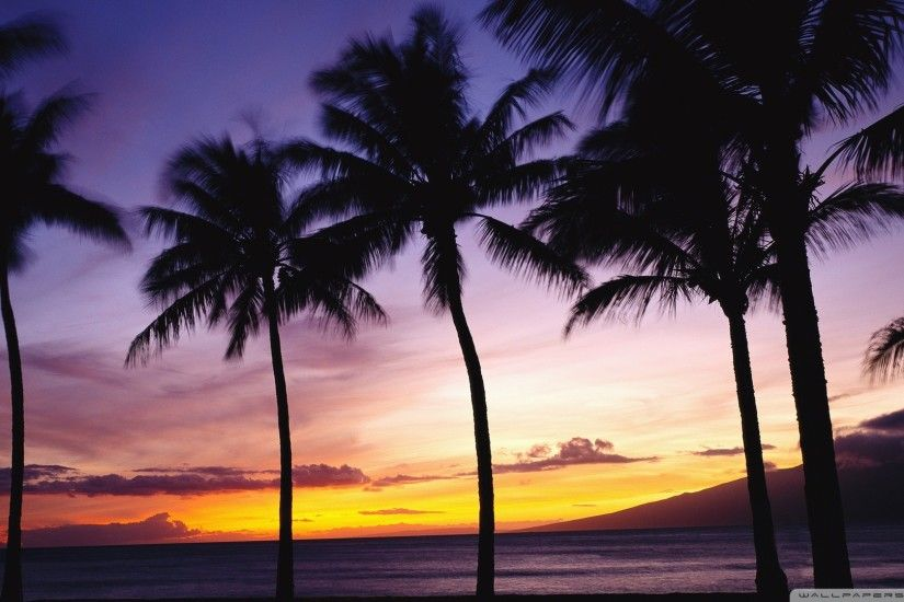 Beach Sunset With Palm Trees Wallpaper Free Desktop