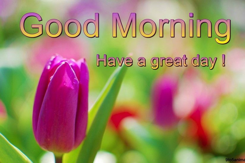 Lovely Good Morning wishes Shining Tulips Green Purple Leaves Yellow  Flowers Sky Flower Hd Live Wallpaper