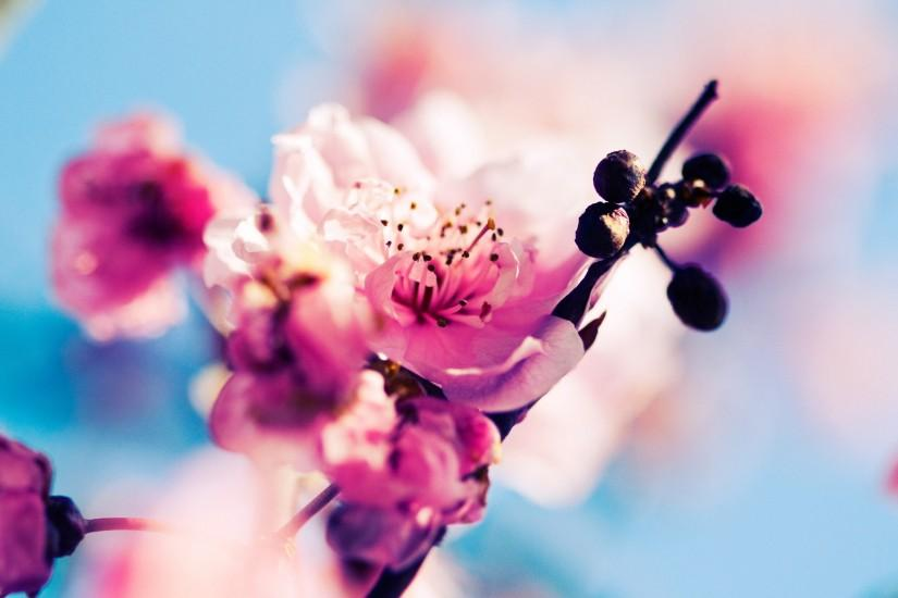popular spring wallpaper 2560x1600 for mac