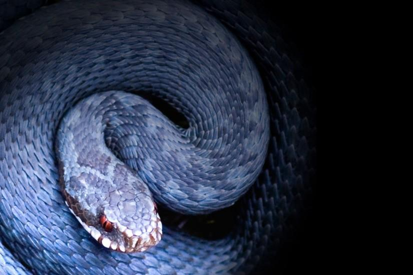 Beautiful Snake HD Wallpapers