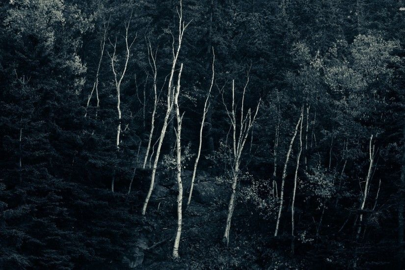 Dark woods wallpaper - 952818