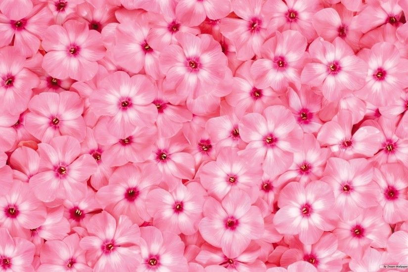 Spring Background Pixelstalk. Wallpaper Flower Beautiful. Flowers  Wallpapers Wallpapersafari