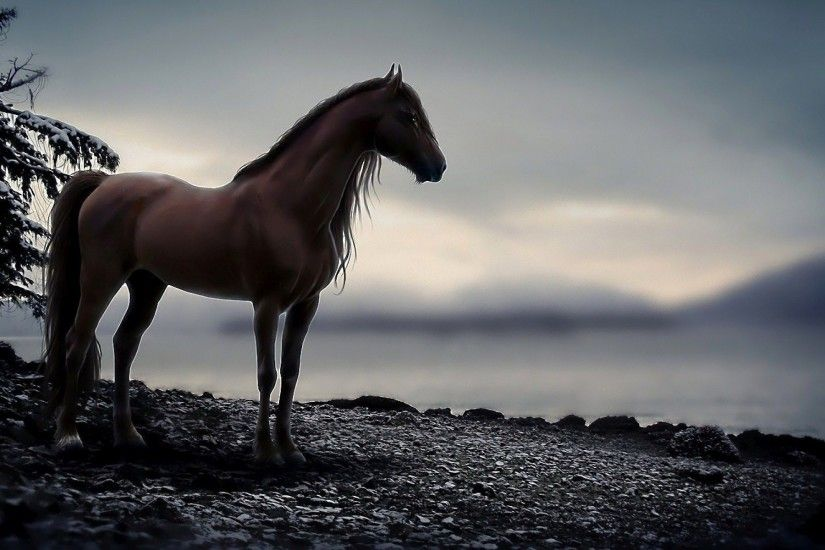 wallpapers hd horse 1 amazing free 4k 1920×1200 Wallpaper HD