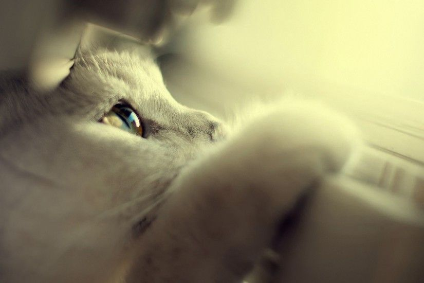 Cute White Kitten HD Wallpaper 1920x1080 1920x1200