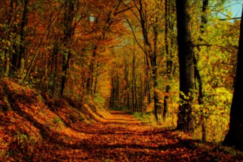 Fall Forest Backgrounds, wallpaper, Fall Forest Backgrounds hd .