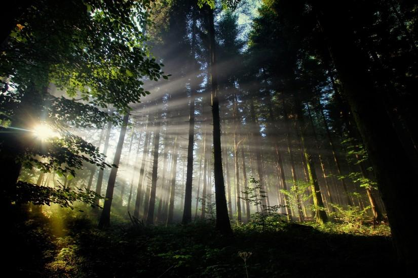 download free dark forest wallpaper 2560x1600 for android 40