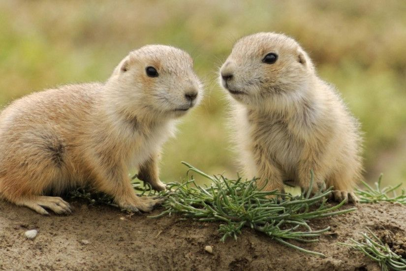 3840x2160 Wallpaper animals, couple, small, grass, ...