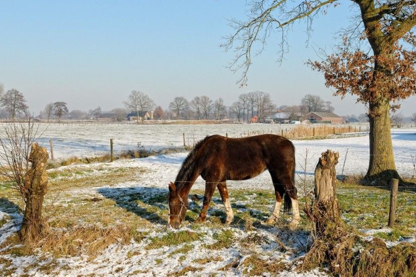 Farm Horses Winter Landscapes Seasons Snow Fields Grass Trees Nature Animals  Animal Christmas Wallpapers - 1920x1200