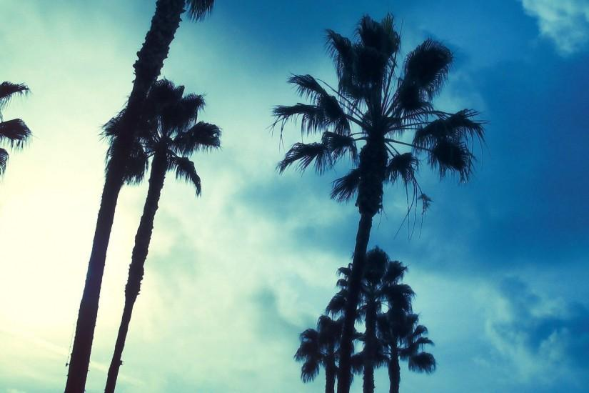 Wallpapers For > Palm Tree Background