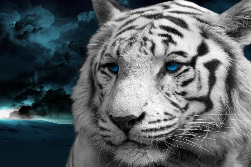 1000+ images about White Bengal Tigers on Pinterest | Eyes .