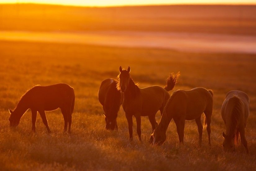 horse, Sunset, Animals, Sunlight, Field Wallpapers HD / Desktop and Mobile  Backgrounds