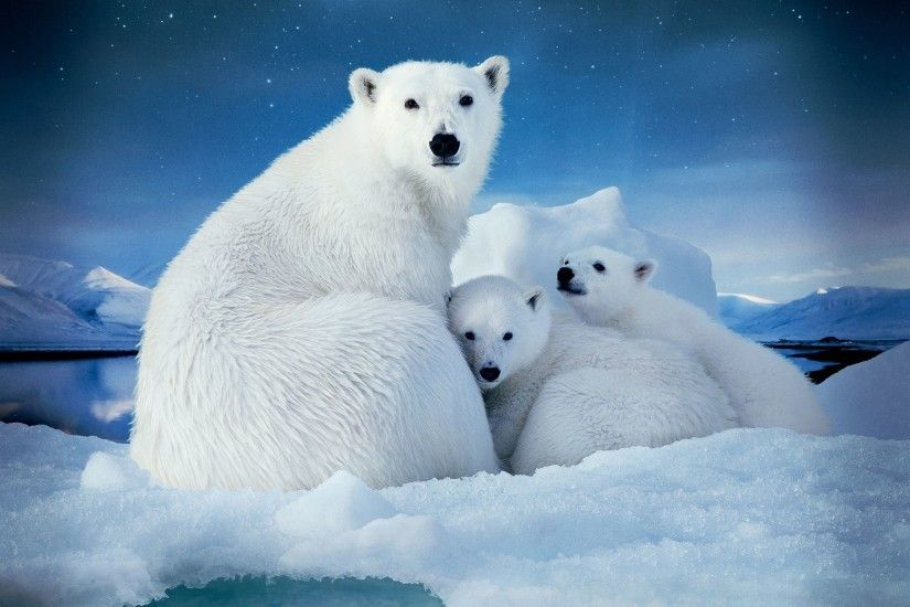 Polar bear | Arctic, Polar Bear / Wallpapers as