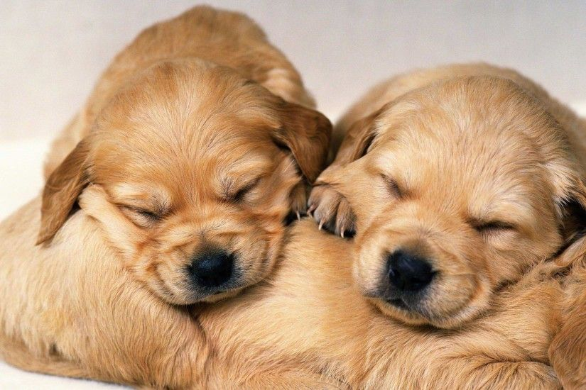 Puppies Wallpapers - Full HD wallpaper search - page 3