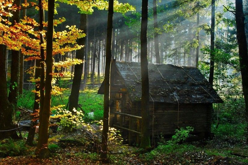 112 Wooden House In Forest Wooden House Wallpapers - Full HD wallpaper  search