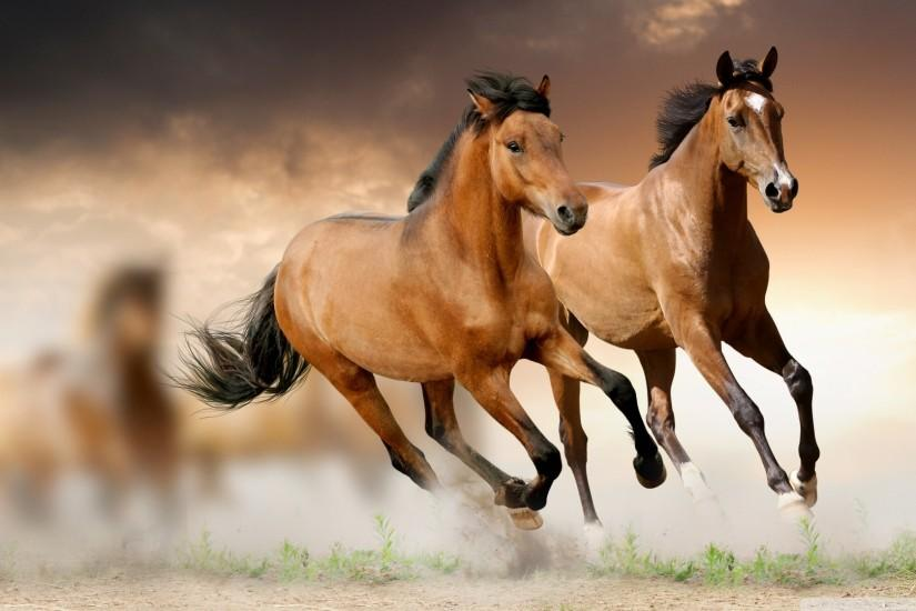 horse backgrounds 1920x1080 for retina