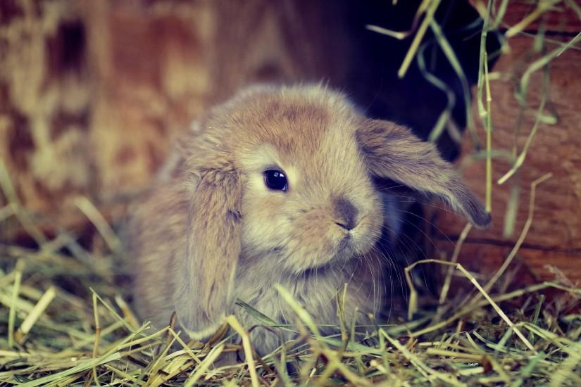 Cute fluffy bunny Wallpapers Pictures Photos Images. Â«