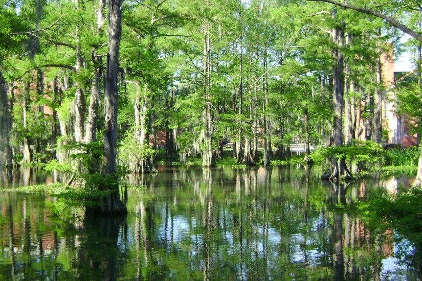 Cypress Lake is a ha) swamp-like lake in the heart of the University of  Louisiana at Lafayette campus that started as a buffalo wallow.