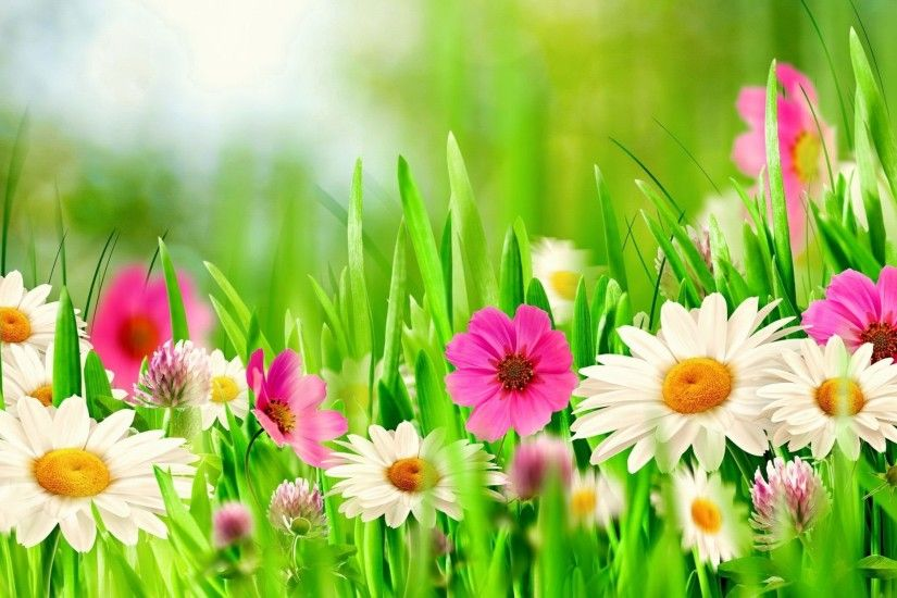 Spring Flowers Wallpaper HD Download Of Colorful Flowers